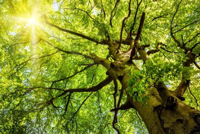 Tree, Zacchaeus, Jesus, am I known, does God know me, does Jesus love me,