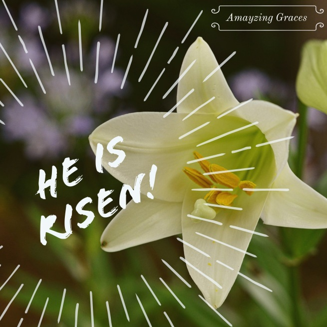 He is Risen! Easter lily, Amayzing Graces, Karen May