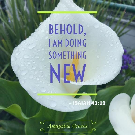 Lily, Behold I am doing something new, Amayzing Graces, Karen May